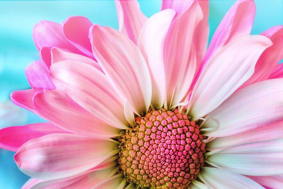 ピンクの綺麗な花
